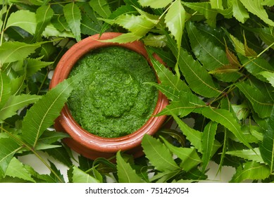 Neem leaves used as ayurvedic  medicine with ground paste over white background Kerala, India. Used in skin care, beauty products and creams.