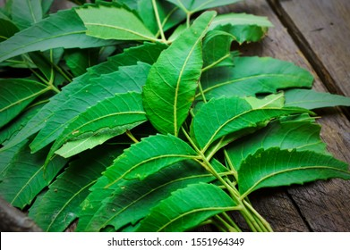 neem on wooden table,neem leaves,ayurvedic neem,neem branch on table,neem herbs ,herbal neem,herbal neem leaves