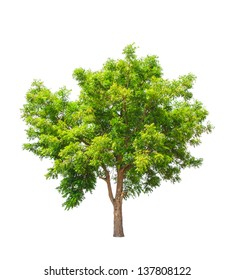 Neem Tree Images Stock Photos Vectors Shutterstock Collection of christmas tree cartoon images (39). https www shutterstock com image photo neem plant azadirachta indica tropical tree 137808122