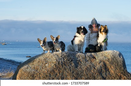 Neeme / Estonia - January 14 2018: Teenager girl in white jacket hugging rough coated collie dog on an rock. Beach of the frozen Baltic sea. Eager dog next to the girl. Winter landscape, sunny day.