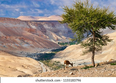 The Negev is a desert and semidesert region of southern Israel.
