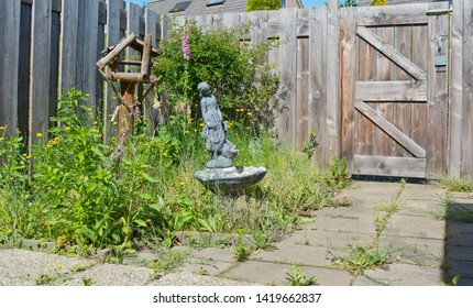Neglected back yard with weeds, foxglove and other blooming weeds and old birdhouse and stone statue, enclosed by a wooden fence and door
