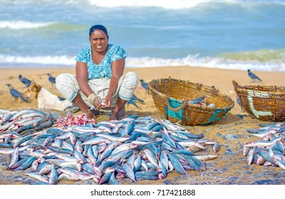 NEGOMBO, SRI LANKA – AUGUST 28: Fishermen and fisheries activities at fish market on August 28 2017 In Negombo, Sri Lanka. Negombo Is Known For Its Centuries Old Fishing Industry & Long Sandy Beaches