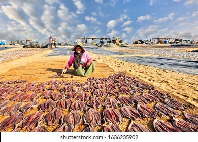 NEGOMBO, SRI LANKA - MARCH 22, 2019: Local woman dries fish on the beach, in Negombo, Sri Lanka