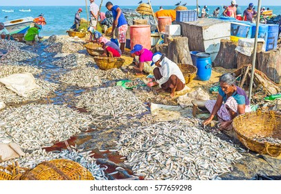 NEGOMBO, SRI LANKA - NOVEMBER 25, 2016: Workers clean the heaps of anchovies and fold it to baskets, preparing for sale at the Main Fish Market, located next to the port, on November 25 in Negombo.
