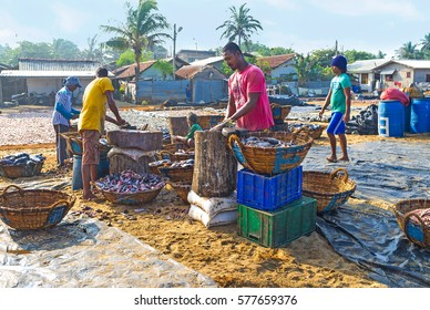 NEGOMBO, SRI LANKA - NOVEMBER 25, 2016: The beach next to the Main Fish Market occupied with fishing port, areas for fish cleaning, cutting and packing also located here, on November 25 in Negombo.
