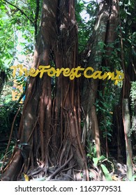 """Negros Oriental, Philippines; August 11, 2018: A banyan tree, locally known as """"balete"""" tree, inside The Forest Camp, a nature park in Valencia with freshwater swimming pools surrounded by greenery."""