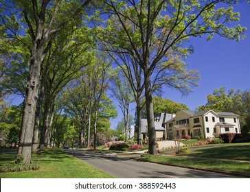 Neighborhood Street in the Spring, Queens Road West in Charlotte, North Carolina