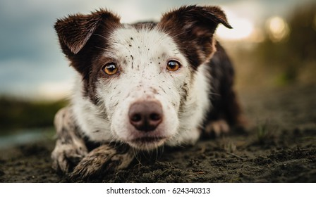 Nelly - my heart and soul. The craziest Border Collie I've ever met - the intensity never leaves her eyes. She is, through and through, a working ranch dog.