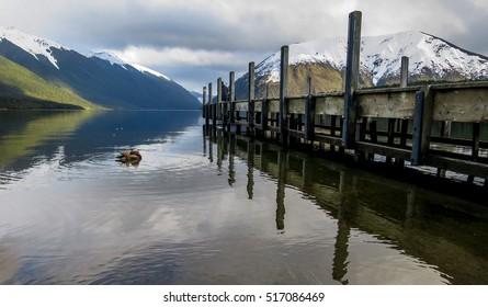 Nelson Lake and a Mandarin Duck