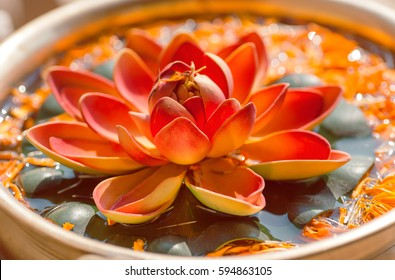 Nelumbo flower known as Lotus. Sacred plant in Hinduism and Buddhism