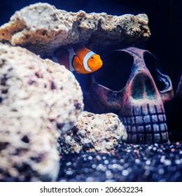 Nemo fish in the hidden skull