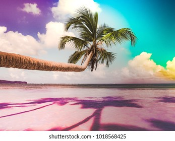 Neo palm tree in paradise  beach