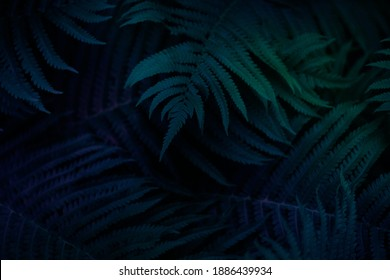 neon background with tropical leaves. Neon background.