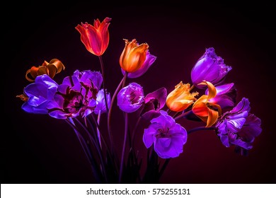 Neon colors in the dark. Tulips on a black background. Flowers for decoration.