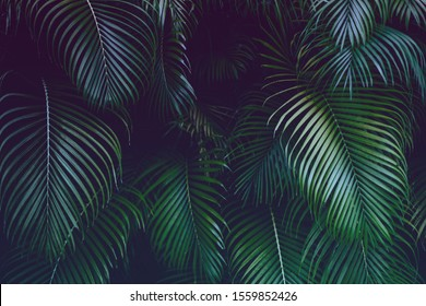 Neon green palm tree leaves on dark blue and pink background. Creative tropics concept. Rich greenery.