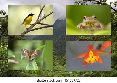 Neotropical biodiversity of species of birds, frogs, orchids and butteflies