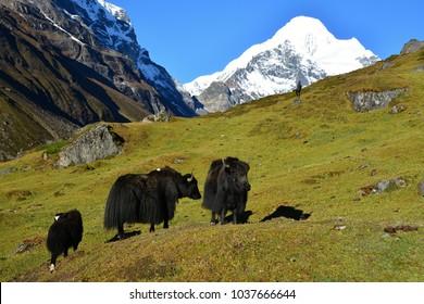 Nepal, the Himalaya mountains