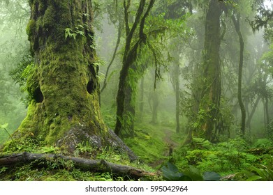Nepal jungle with fog