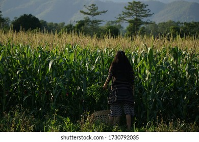 Nepali girl working in the farmland from Chitwan.