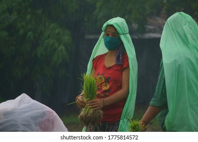 Nepali  woman covering her face with cloth mask due to Covid-19 fear while working in the farmland from Chitwan Nepal
