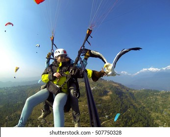In Nepal,the travelers go paragliding in Pokhra,but only very few of them go parahawking.The parahawking is when you go paragliding on the sky,you feed a hawk and fly with it.The model is myself.