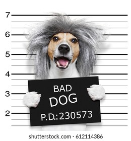 nerd crazy jack russell dog at the police station for a mugshot, as criminal or guilty , holding a prison banner