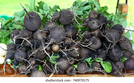 Nero Tondo Black Spanish Radishes