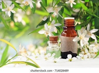 Neroli (bitter orange) blossom perfume. Citrus essential oil bottles, spring flowering tree with white aroma flowers and green freshness. Herbal beauty treatment