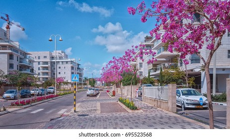 Nes Ziona, Israel-March 20, 2016: Beautiful view of purple blossoming Judas trees grow on sidewalk in Khoshen street. Modern white-gray tiled 4 story residential condominiums are located on both sides