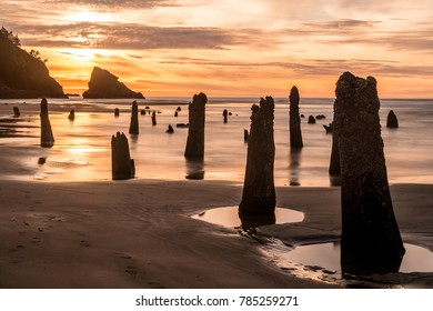 Neskowin Beach Oregon Sunset and 2000 Year Old Fossilized Spruce Trees known as Ghost Trees appear when a Minus Tide Occurs.