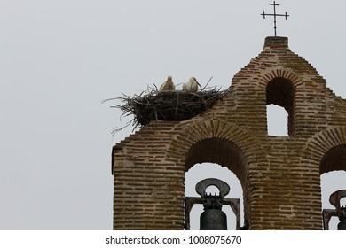 storks´s nest in a belfry. The storks are in their nest