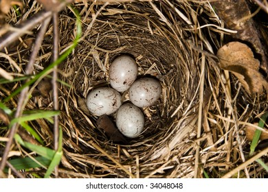 Nest of a bird on the earth with eggs.