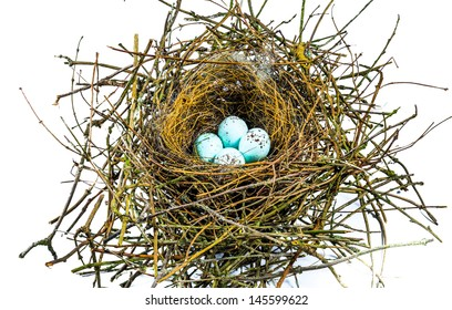 The nest of a Bullfinch with four blue eggs