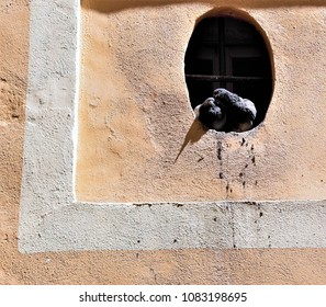 nest of couple of pigeons cooing, preening, affectionately in oval street window of the historic center of Cádiz, andalusia, Spain,