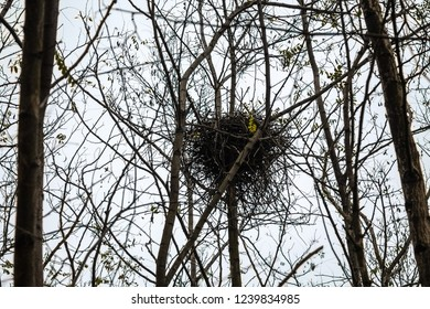 The nest created by birds in the forest is abandoned for the winter. Nobody lives