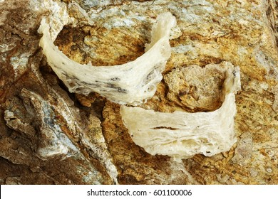 The nest of Edible-Nest Swiftlet, raw edible bird's nest materials for tradition chinese medicine,Edible nest soup is popular at Hong Kong, Taiwan, China and Southeast Asia. Edible's bird nest on rock