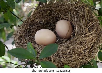 Nest and egg