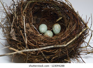 Nest with egg on white background
