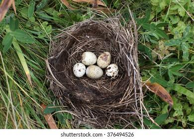 Nest with egg of wild bird outdoors