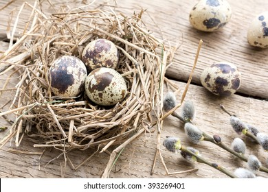 Nest with eggs of quails and pussy willow branches