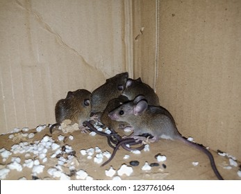 Fantastic Imagenes Fotos De Stock Y Vectores Sobre House Rats Home Interior And Landscaping Ologienasavecom