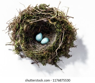 A bird's nest housing two bright blue eggs.