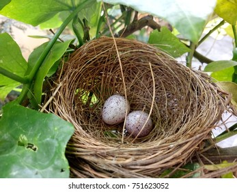 A nest in on tree with two eggs