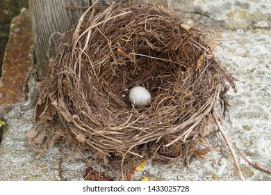 Nest with one egg on the edge of a well