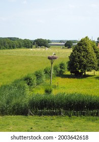 Nest with storks in a typical Dutch flat landscape.
