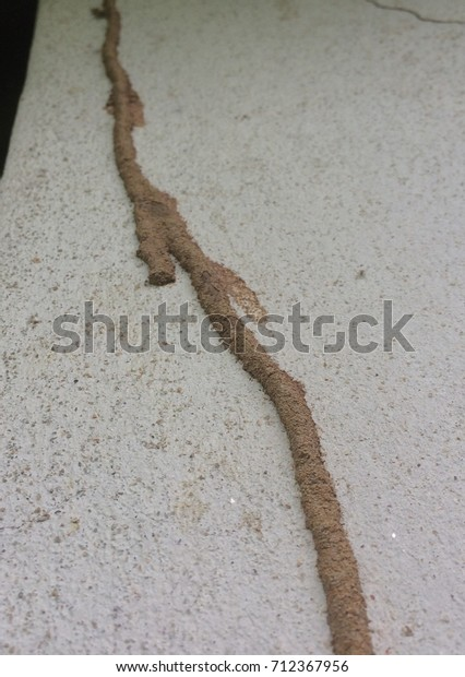 Nest Termites On Wall House Stock Photo Edit Now 712367956