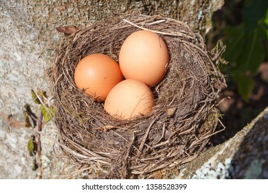 Nest with three hen eggs in a tree for Easter