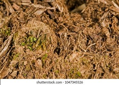 Nest of a trapdoor spider (Cteniza moggridgei)
