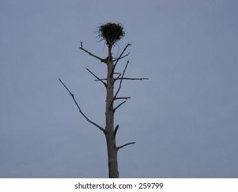 Nest in tree